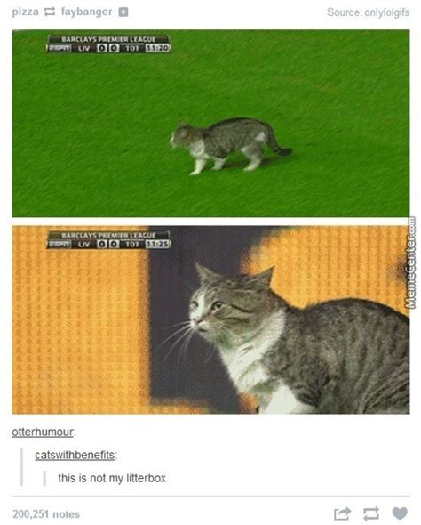Football Cat Meme - cat football memes best collection of funny cat football pictures