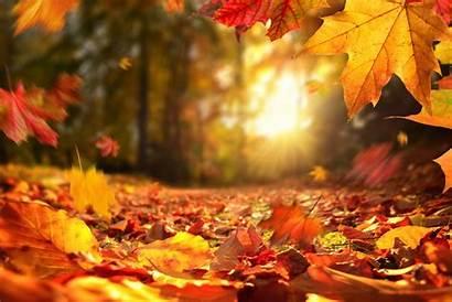 Quotes Fall Autumn Istock