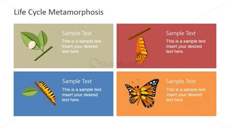 butterfly metaphor business lifecycle powerpoint slidemodel