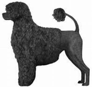 Will Ontario-born Portuguese water dog Matisse take Best ...