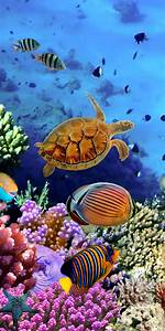 Bilder Mit Fischen : fototapete korallenriff mit fischen tapete kunstdruck wandbild ebay ~ Frokenaadalensverden.com Haus und Dekorationen