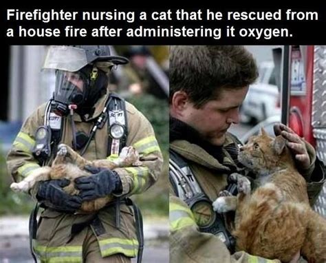 Firefighter Nursing A Cat He Rescued From A House Fire