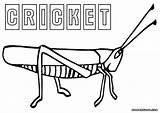 Cricket Coloring Pages Print Insect Colorings Animal sketch template