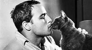 The Cat In The Godfather: Real Power Behind the Corleone ...