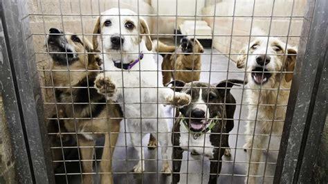 peta prime animals suffer  die  shelters put
