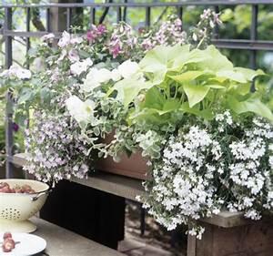 balkonkasten mit lobelien begonien und impatiens bild With französischer balkon mit garten begonien