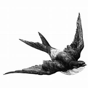 bird, black, cute, drawing, illustration, white - image ...