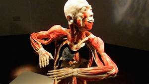 Preserved Human Body Exhibition To Open In Liverpool City