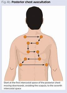 How To Perform Chest Auscultation And Interpret The