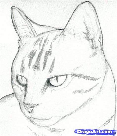 draw  cat head draw  realistic cat step