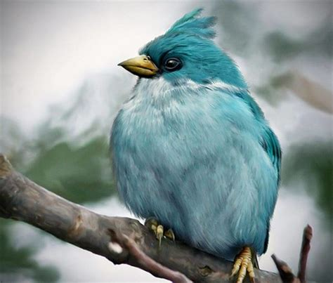 angry birds game based   real bird species pets