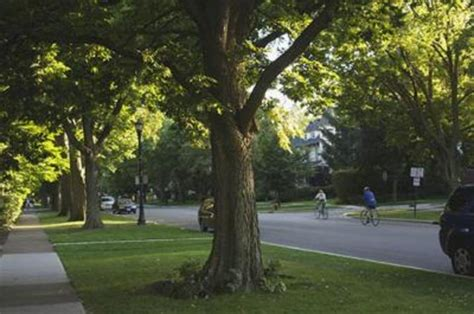 uk public seminars  throw light  urban forests uknow