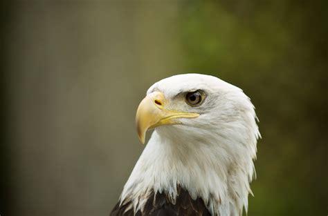 vancouver island birds of prey