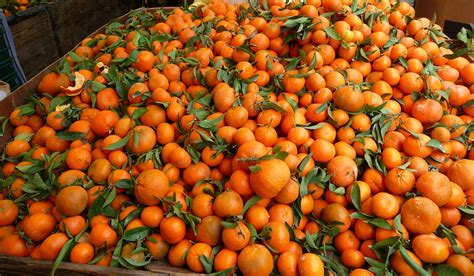 tangerine background wallpapers  images wallpapers