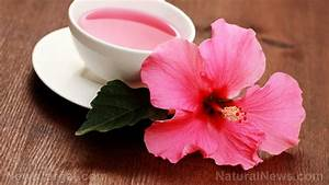 Drink Hibiscus Tea To Naturally Lower Your Blood Pressure  U2013 Naturalnews Com