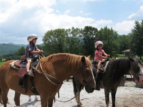 horse riding breeds horses draft ride gentle trail child adoption safety notice helmets ponies grandson hubpages