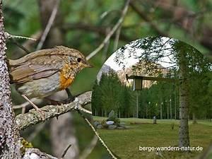 Futterhaus Für Vögel : vogelfutterhaus zur vogelbeobachtung berge wandern ~ Articles-book.com Haus und Dekorationen