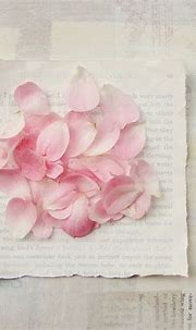 Rose petals. | Petals, Colorful roses, Dreamy photography