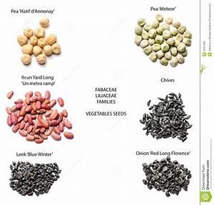 Vegetables Seeds- Varieties Stock Photo - Image: 35337898