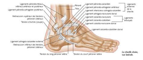 douleur sur le cote exterieur du pied anatomie et physiologie l articulation tibio tarsienne ou cheville est une articulation
