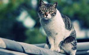 Proxecto Gato: cats wallpapers by bighdwallpapers