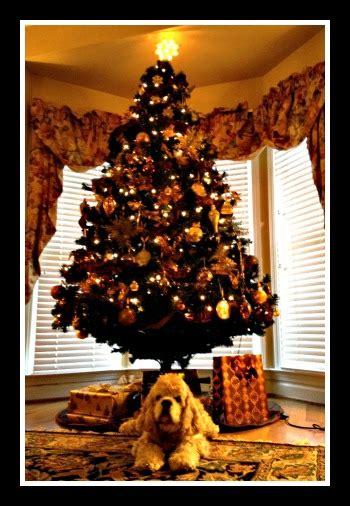 christmas tree recycling tacoma
