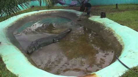 captivity killed lolong youtube