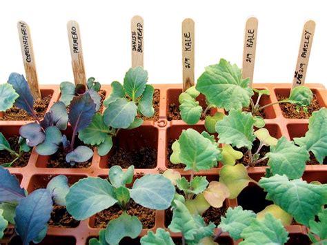 Seed Starting Made Simple  Organic Gardening Mother