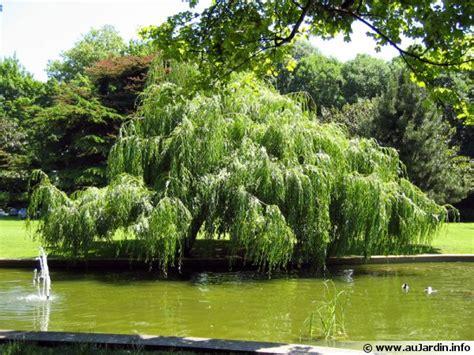 arbre à croissance rapide arbres et arbustes 224 croissance rapide