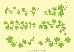 Green Ivy Vectors - Download Free Vector Art, Stock ...