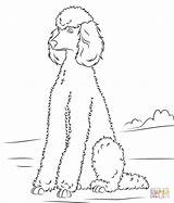 Coloring Pages Poodle Printable Poodles Drawing Paper sketch template