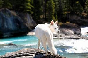 25+ best ideas about Tamaskan Dog on Pinterest | Wolf dogs ...