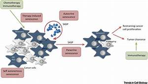 Non-Cell-Autonomous Regulation of Cellular Senescence in ...