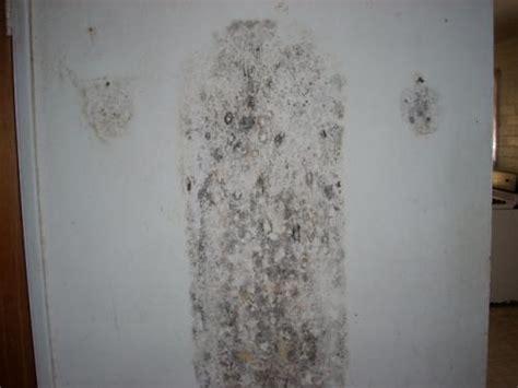 mold   phoenix mold inspections phoenix mold