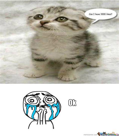 Cute Kitten Memes - cute kitten by recyclebin meme center