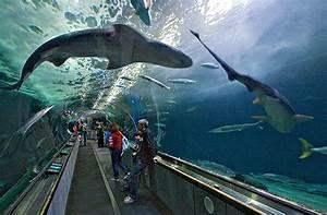 Stores Aquarium of the Bay