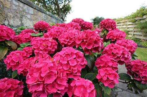 Using Flowering Shrubs For Landscaping And Top 6 Shrub Choices