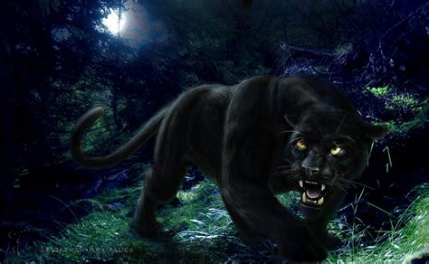 Isuzu Panther Backgrounds by Black Panther Backgrounds Wallpaper Cave