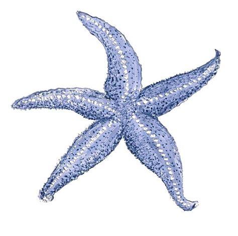 starfish clipart starfish drawing starfish starfish