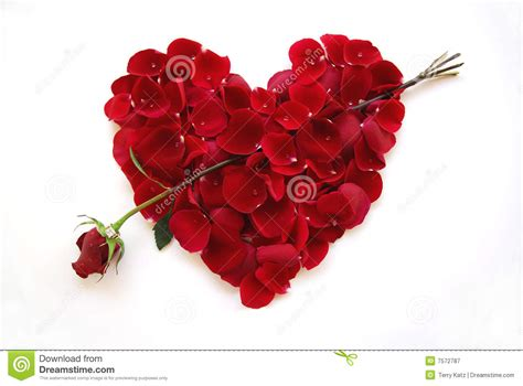 Valentines Day Red Heart With Rose Arrow Stock Image ...