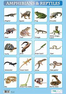 1000+ images about REPTILES AND AMPHIBIANS LIST NAMES on ...