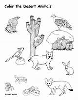 Desert Coloring Pages Animals Animal Printable Habitat Plants Print Landscape Biome Nature Habitats Cactus Colouring Sheets Worksheet Drawing Diorama Scene sketch template