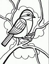 Coloring Bird Drawing Pages Chickadee Sparrow Birds Draw Drawings Books Printable Simple Line Seeds Sparrows Ladybug Chickadees Designs Perching Easy sketch template