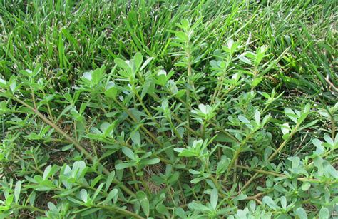 Dealing With The Top 5 Worst Weeds