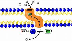 Atp Synthesis And Chemiosmosis In Photosynthesis