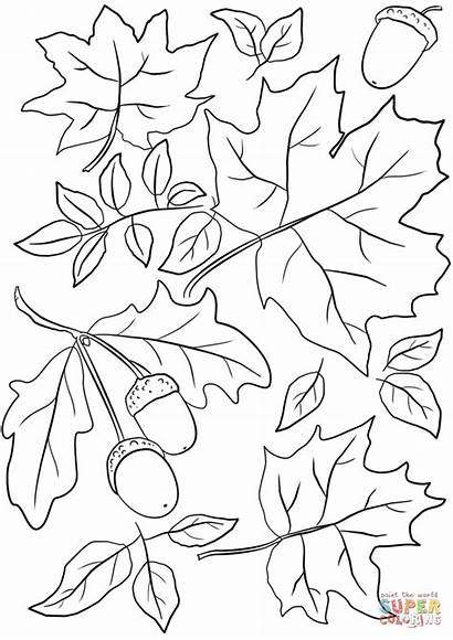 Coloring Pages Summer Leaves Fall Autumn Printable