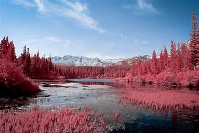 Pink Nature Autumn Lake 4k Trees Wallpapers