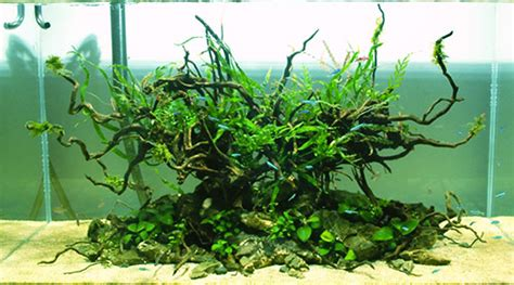 Aquascaping Techniques by Designing An Aquascape Fish Care