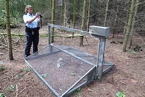 Lebendfalle Selber Bauen : projekte die dem habicht helfen nabu ~ A.2002-acura-tl-radio.info Haus und Dekorationen