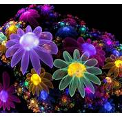 Neon Flowers Hd  HD Desktop Wallpapers 4k